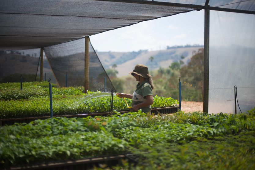 Baumpflanzprojekt in Brasilien